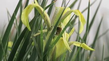 Single Caterpillar On Yellow I...