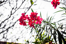 Small Pink Flower Tree Closeup