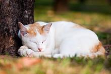 Stray Cat Sleeping Near The Tree