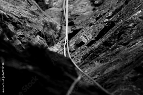 Cuadros en Lienzo Black and white of climbing rope and carabiner (karabiner) on rock climbing in t