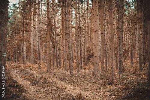Fényképezés  Waldbrandgefahr durch vertrockneten Wald