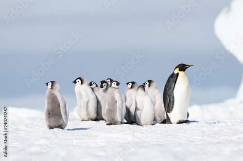 Spoed Fotobehang Pinguin Emperor Penguin with chicks at Snow Hill