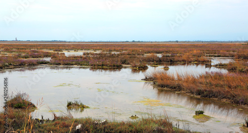 wild environment with marshes in the Venetian lagoon near Venice Canvas-taulu