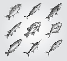 Hand Drawn Fishing Elements Sketches Set. Collection Of Saltwater Sea Or Freshwater River Fish Species Flounder. Different Fish Sketches On White Background