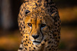 canvas print picture - Gepard