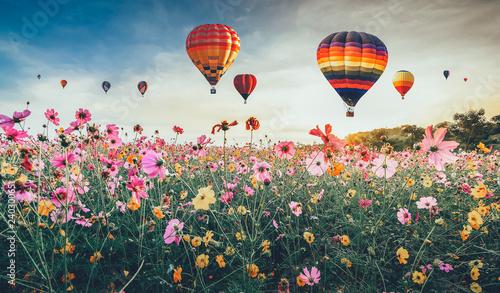 Fotografie, Obraz  Cosmos flower against blue sky  Chiang Rai Thailand