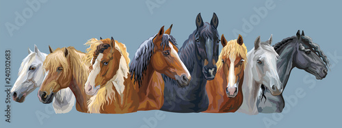 Fototapeta Set of horses breeds 7 obraz