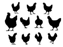 Collection Chicken Logo Vector Design Template, Vector Silhouette Illustration For Chicken Logo