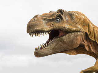 Head profile of a Tyrannosaurus rex (T-rex) model