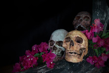Still Life Of Genocide Human Skulls And Flower On Wooden