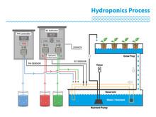 Hydroponic Process, Plant Tree...