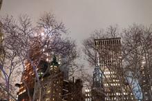 New York City Trees In Fog