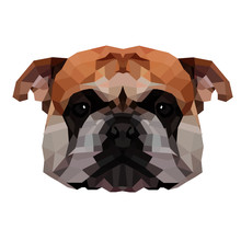 English Bulldog | Low Poly Art