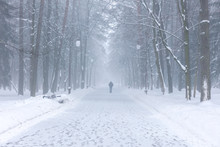 Foggy Park In Winter. Lone Man...