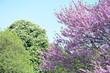 canvas print picture - Bäume im Frühling
