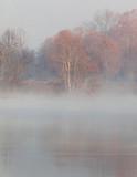 kolory roślin zimą i płaszcz mgły wzdłuż rzeki adda - 240351261