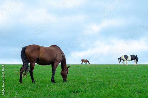 Fototapeta Horses and a pony grazing in a green field in Cotswold, England obraz