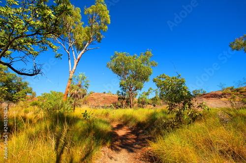 Fototapeta Australian outback wilderness