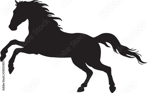 Fototapeta Black silhouette of horse obraz