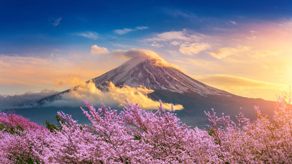 Fototapeta Do sypialni Fuji mountain and cherry blossoms in spring, Japan.