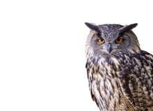 Eagle Owl Isolated