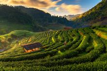 Tea Farm Organic. Tea Farm 200...