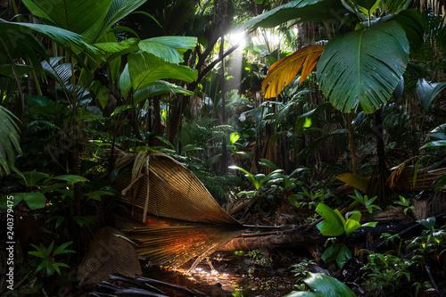 Forêt tropicale de la Vallée de Mai sur l'île de Praslin, Seychelles Canvas-taulu