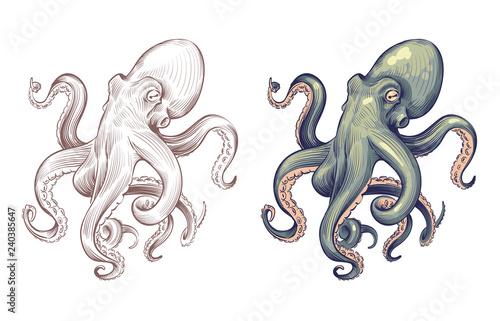 Octopus Fototapet