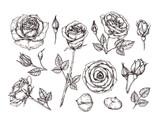 Ręcznie rysowane róże. Naszkicuj kwiaty róży z cierniami i liśćmi. Czarno-biały vintage trawienie wektor zestaw botaniczny na białym tle. Ilustracja płatek róży, szkic botanika roślin kwiatowych