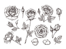 Hand Drawn Roses. Sketch Rose ...