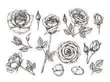 Hand Drawn Roses. Sketch Rose ...
