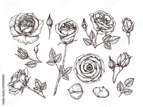 Hand drawn roses Canvas Print