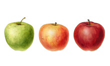 Watercolor Drawing Apples