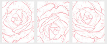 Delicate Hand Drawn Floral Vector Illustrations Set. Big Light Pink Rose Flowers Isolated On A White Background. Subtle Pastel Color Drawing.  Lovely Bright Wall Art.