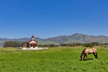 Horse Grazing At Schoolhouse