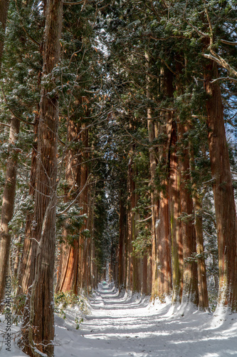 Poster de jardin Parc Naturel 戸隠神社奥社の風景