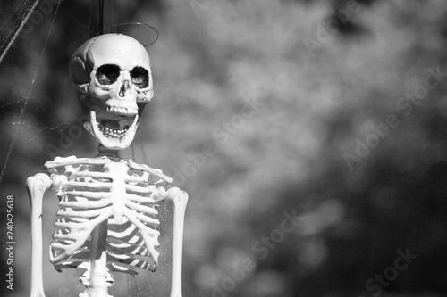 Photo Monochrome Version of Fake Plastic Halloween Skeleton Decoration Poised Frame Le