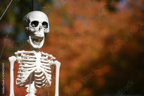 Fake Plastic Halloween Skeleton Decoration Poised Frame Left with its Jaw Open A Canvas Print