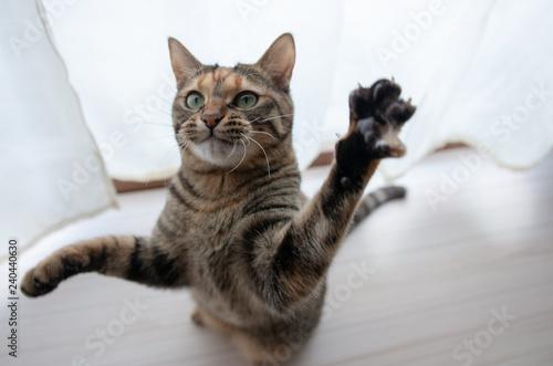 Fotografia  猫パンチ