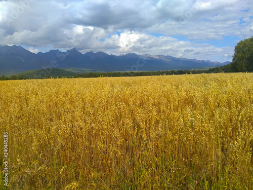 Fototapeta Field at the foot of mountains