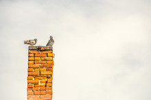 Two Pigeons On A Chimney
