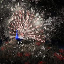 Fairytale Peacock Among The Trees