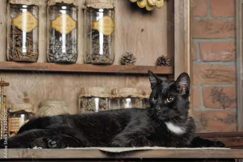 Fotografie, Obraz  Chic black cat lying. Charming, nature.