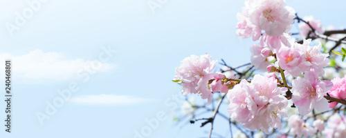 満開の桜と青空