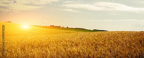 Poster Melon Wheat crop
