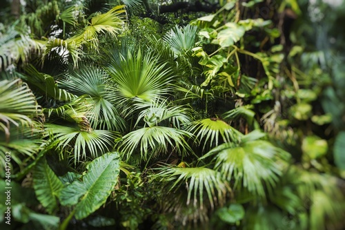 Beautiful palm leaves of tree in sunlight. Selective focus.