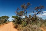 Fototapeta Sawanna - Piaszczysta droga przez brazylijską