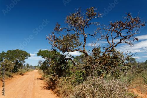 Piaszczysta droga przez brazylijską