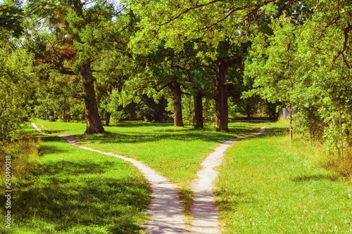 Fotografie, Tablou Splitting the footpath in the park. Summer landscape