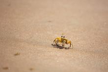 Funny Cute Crab Crawling At Th...